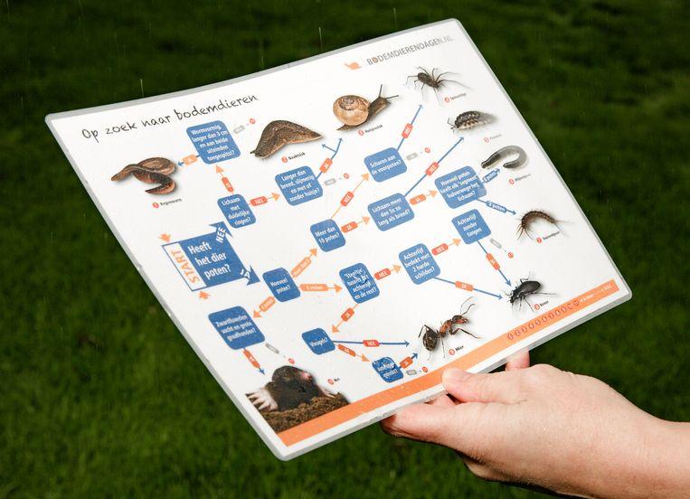 Soortenkaart die wordt gebruikt tijdens de bodemdierendagen. Beeld Anne van Gelder