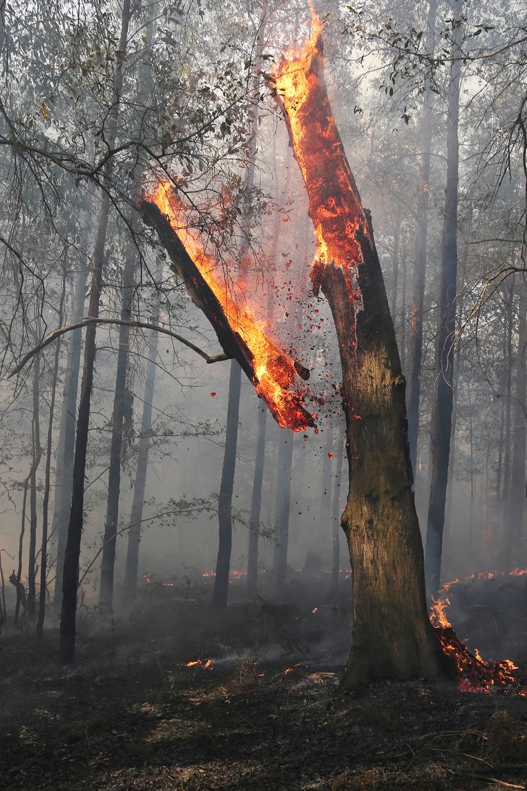 A burnig tree falls during a mop-up by firefighters after a firestorm swept through a property in Bilpin, 75 kilometers (47 miles) from Sydney, Wednesday, Oct. 23, 2013. Scores of Australians evacuated their homes in mountains west of Sydney on Wednesday as intensifying winds fanned wildfires and grounded the helicopters that were fighting them. (AP Photo/Rob Griffith) Beeld AP