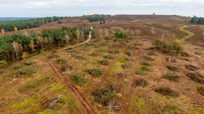 Landschap Overijssel kapt massaal bomen op de Lemelerberg. De bospercelen moeten plaats maken voor herstel van de oorspronkelijke heidevelden.