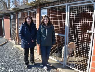 Crowdfunding voor dierenasiel dat nog steeds geen oplossing heeft voor infrastructuurprobleem
