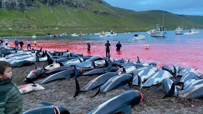 1428 dolfijnen in naam van traditie gedood op Faeröer-eilanden