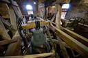 Vorig jaar stond de kerk nog in de steigers voor renovatie van de toren.