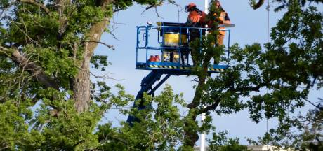 Bomenkap Het Loo doet in Apeldoorn veel stof opwaaien; zagen van takken begonnen