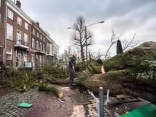 Omgevallen boom op Rijnkade stond al op 'zaaglijst'