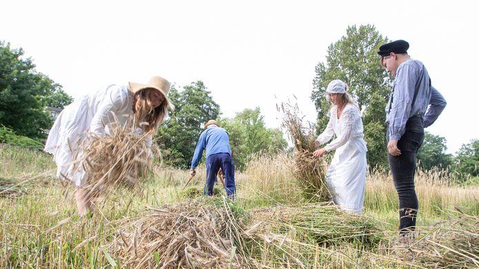 Terwijl de heren het maaiwerk verrichten, binden de dames de roggestengels samen tot garven.