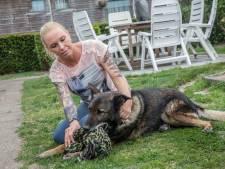 Hond Zoran laat zich niet ontvoeren: 'Hij liet niet meer los, zo had ik hem nog nooit gezien'