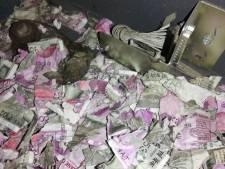 Peperdure maaltijd: rat vreet voor 1,3 miljoen roepies biljetten aan