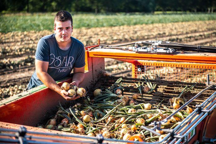 Boer Djordy Hoogerwerf rooit de uien dit jaar extra vroeg vanwege het warme weer.