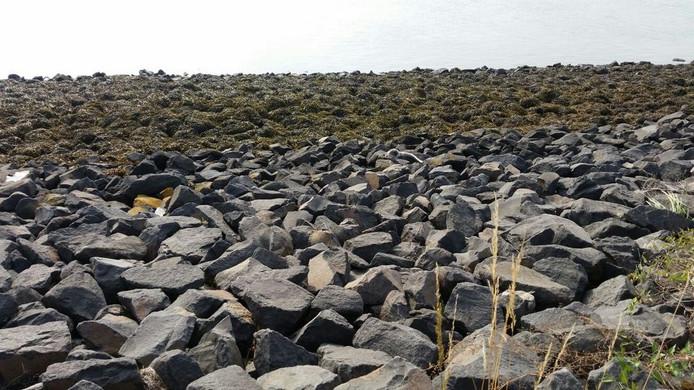 Zoek de zeehond, de Friese vakantiegangers hebben het diertje gespot en melding gemaakt bij ASeal Stellendam.