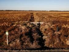 Onderzoek: maatregelen voor meer hoogveen in Wierdense Veld zijn een gok