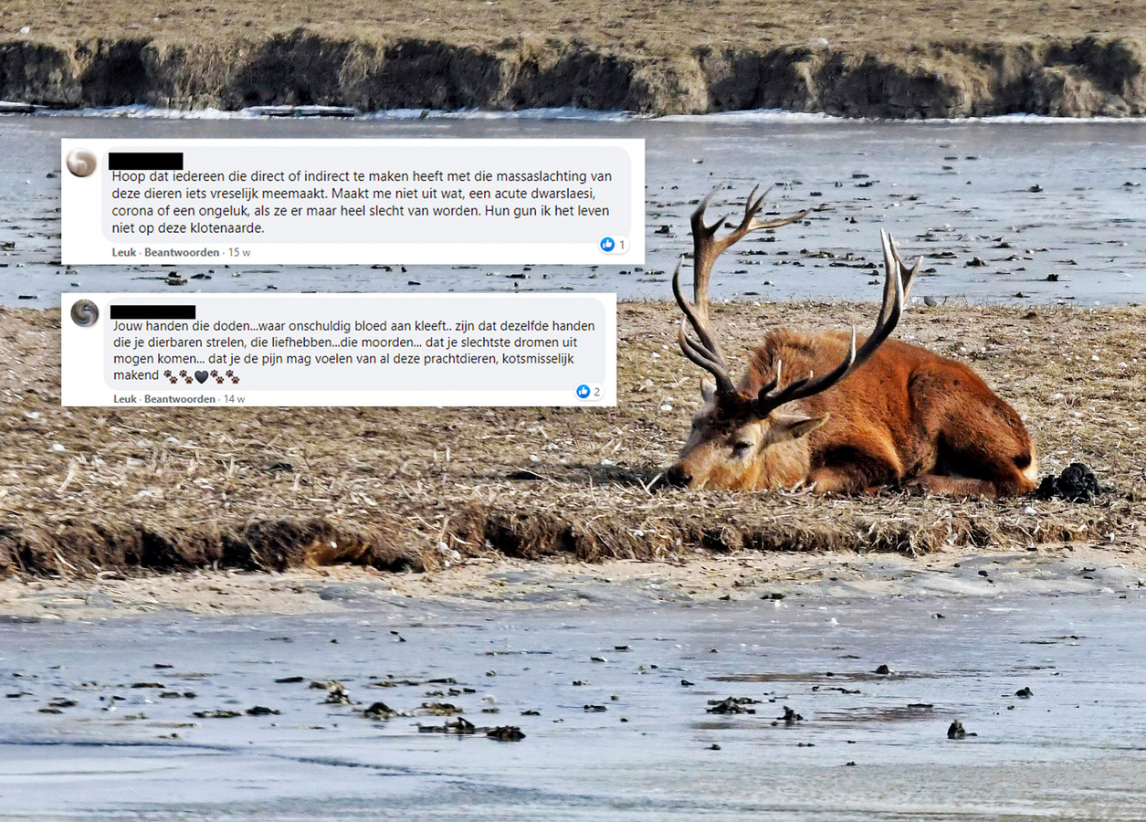 Voorbeelden van woedende reacties op Facebook over de situatie in de Oostvaardersplassen.
