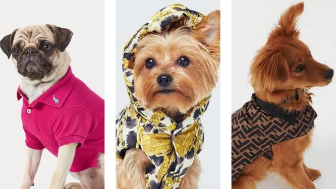 """Een hondenjasje van Versace of halsband van Louis Vuitton: luxemode voor onze beestjes boomt. """"Sommige honden vinden het maar niks"""""""