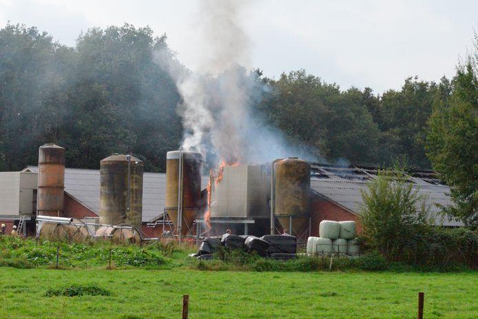 De brandweer kon niet voorkomen dat driehonderd varkens bij de brand in de stal omkwamen
