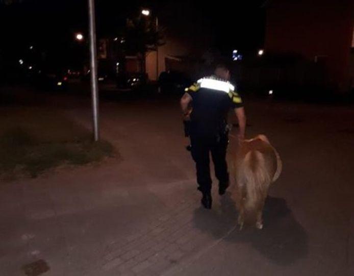 Met de pony aan de hand loopt een politieagent door de wijk Aalderinkshoek.