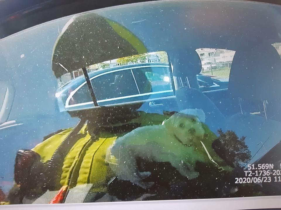 Het hondje zat opgesloten in de auto