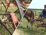 Ton (67) werkt nog met nostalgische landbouwwerktuigen