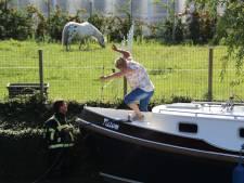 Boot vaart tegen elektriciteitskabel Kwintsheul