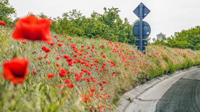 Brokken na botsing op kruispunt R8 in Kuurne