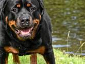 Bewoners schrikken van overval met honden op buur in Zevenaar, maar: 'Je komt hier makkelijk binnen'