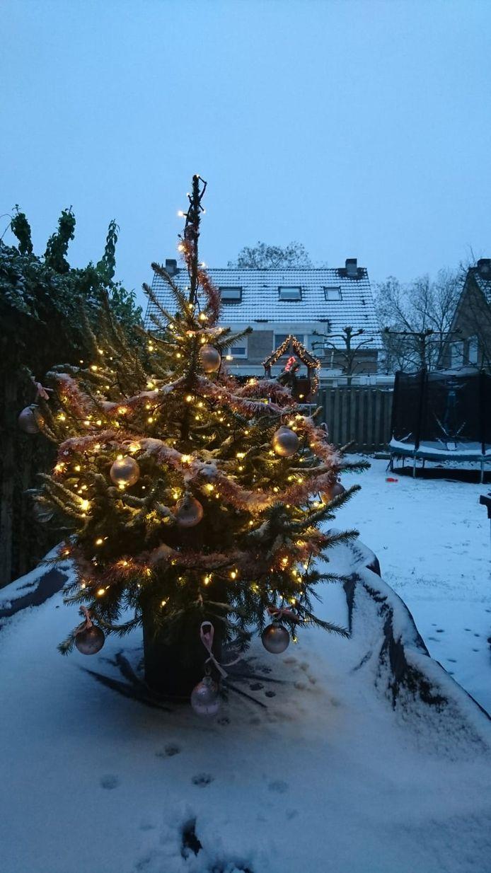 Zo lijkt het net alsof de kerstboom nog op zijn vertrouwde plaats in het bos staat.