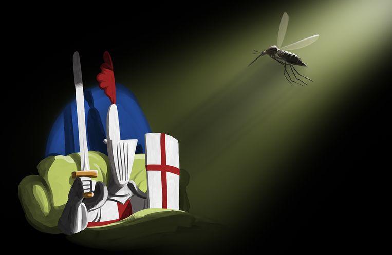 Muggen bestrijden en verjagen: wat werkt wel? Beeld Matteo Bal