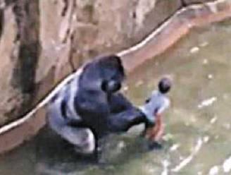 """Felle kritiek op doodschieten gorilla Harambe: """"Hij viel weerloos kind niet aan"""""""