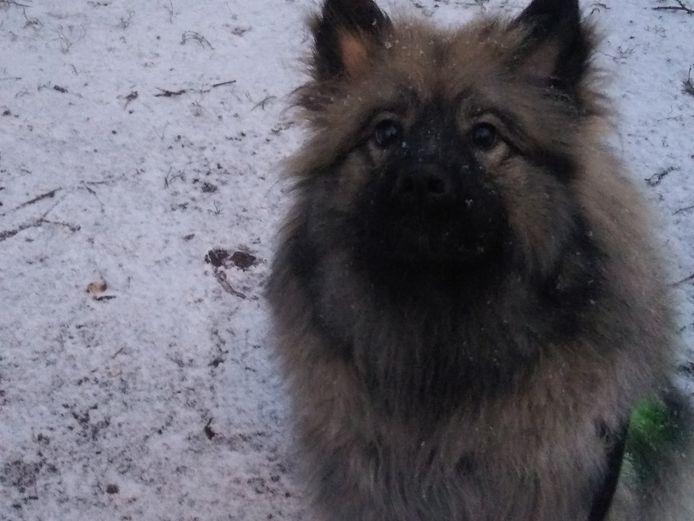 Lekkere sneeuwwandeling met m'n hond Roy.