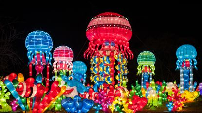 Zeg niet meer China Light maar wel Jungle Book Light: Mowgli, Baloe en Bagheera komen dit jaar naar de zoo