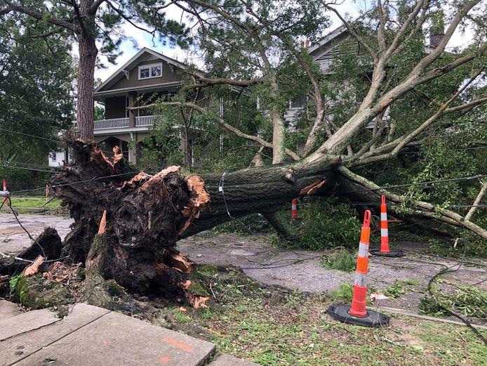 Bomen werden ontworteld in New Orleans.