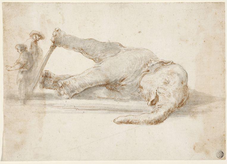 Het einde van het beroemde olifantje, getekend door Stefano della Bella. Beeld Stadel Museum/ARTOTHEK