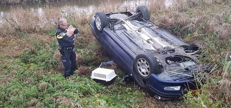 Kat ontsnapt na auto-ongeluk in IJzendijke