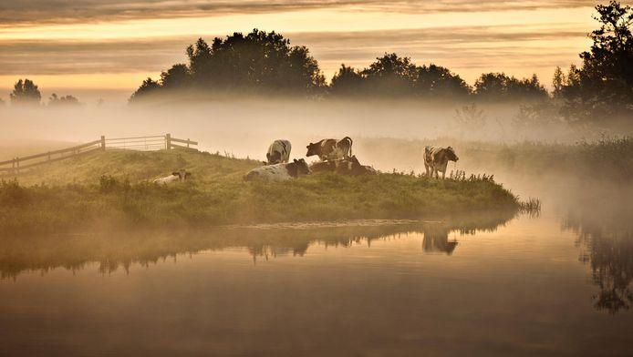 Twintig natuurgebieden strijden om de titel 'Mooiste Natuurgebied van Nederland'.