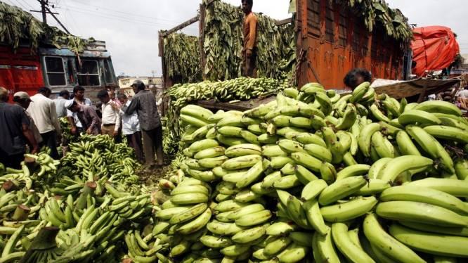 Bananen kunnen in de toekomst aardappelen vervangen