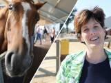 Paarden poetsen, vlechten en erop rijden bij Manege Meinders