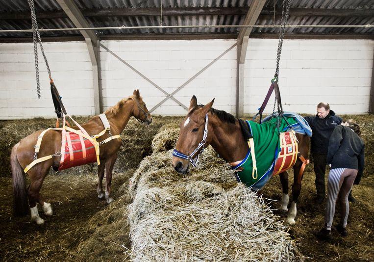 Bij de manege de Veerkracht is de dierenarts bezig met het verzorgen van paarden die de ernstige virusziekte rhinopneumonie hebben. Beeld Hollandse Hoogte / Koen Verheijden