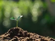 Schouwse PvdA plant bomen in verkiezingscampagne