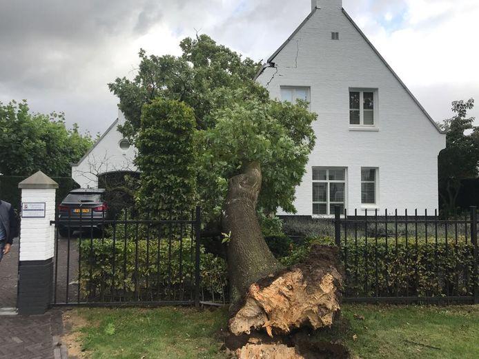 Een van de bomen in het wijkje Tegenbosch in Eindhoven ging woensdagavond door de storm tegen de vlakte.