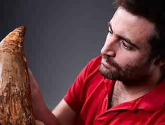 Vijf miljoen jaar oude walvistand gevonden in Australië