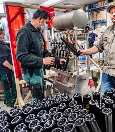 De Groesbeekse wijn gaat in de fles