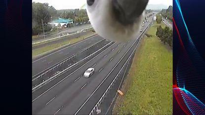 Onverwachte bezoeker op verkeerscamera