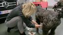 Kwamen ook aan bod in de serie: de plasproblemen van hond Marcel.