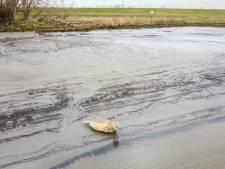 Deze 'verdwaalde' zeehond bij Oud-Beijerland blijkt helemaal niet verdwaald