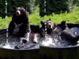 Dolle waterpret wanneer bruine beer Takoda badje neemt