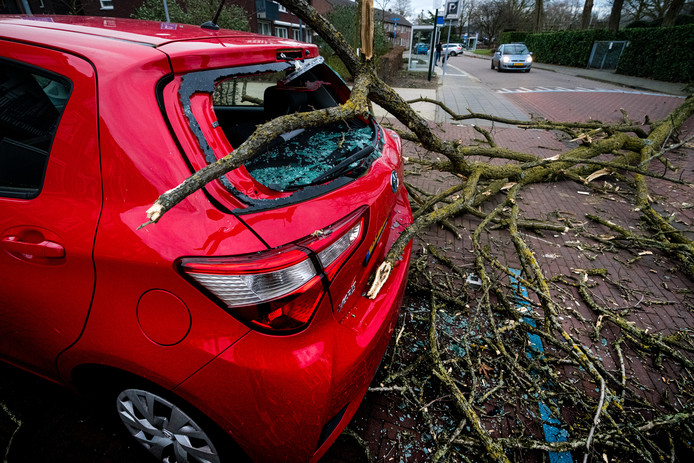 De storm Ciara zorgt voor veel schade en overlast in Nederland. In het Brabantse Mierlo is een boom op een auto gevallen.