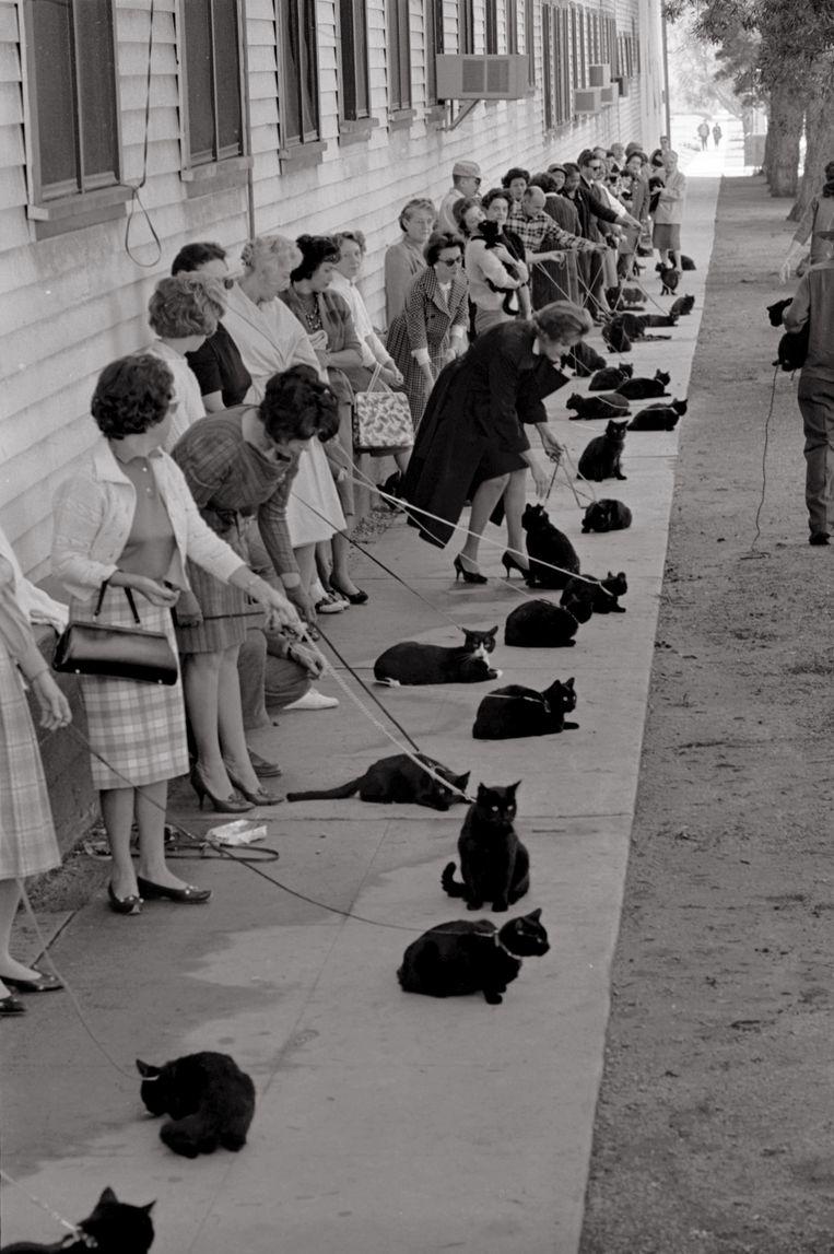 Maar liefst 152 zwarte katten schoven met hun baasje aan voor de audities van 'Tales of Terror', een horroradaptie  van het verhaal 'The Black Cat' (1961) van Edgar Allan Poe. De hoofdrol ging uiteindelijk naar een professionele kat,  die het gewoon was gefilmd te worden. De zeven poezen met de 'gemeenste blik' uit de auditie werden gekozen als invallers. Beeld © Ralph Crane – Getty Images