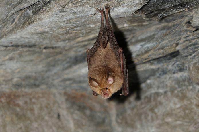 Les prélèvements avaient été réalisés sur des chauves-souris du genre Rhinolophus, fortement soupçonnées d'être à l'origine de la pandémie actuelle.