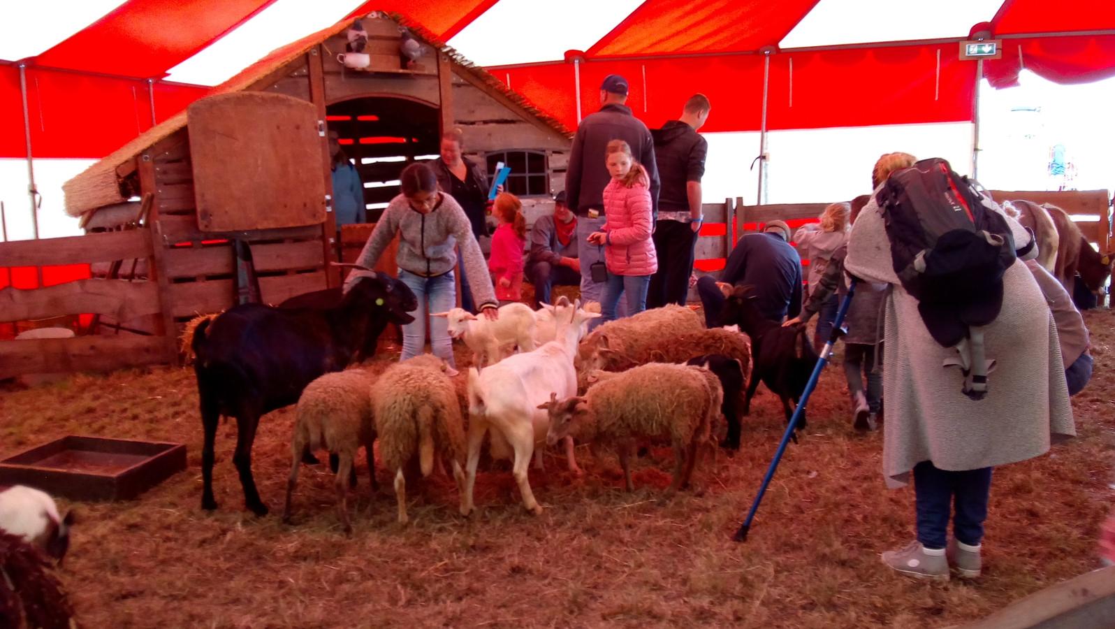 Kinderboerderij tijdens streekdagen in Meeuwen