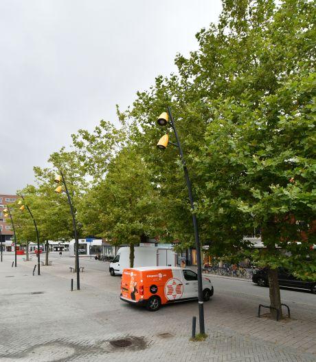 Van alle 'peperdure' bomen op Hengelose marktplein kan er straks slechts één verplant worden