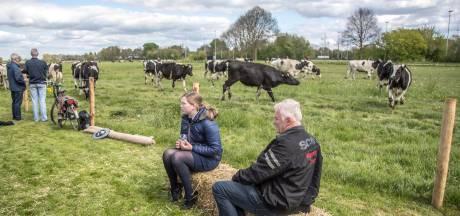 Zwolle wil langer stadslandbouw in Dijklanden