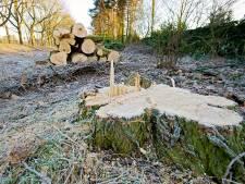 Voor burgers niet altijd duidelijk welke bomen gekapt worden bij kapvergunning